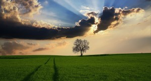 arbre seul mais avec lumire countryside-2175353_1920